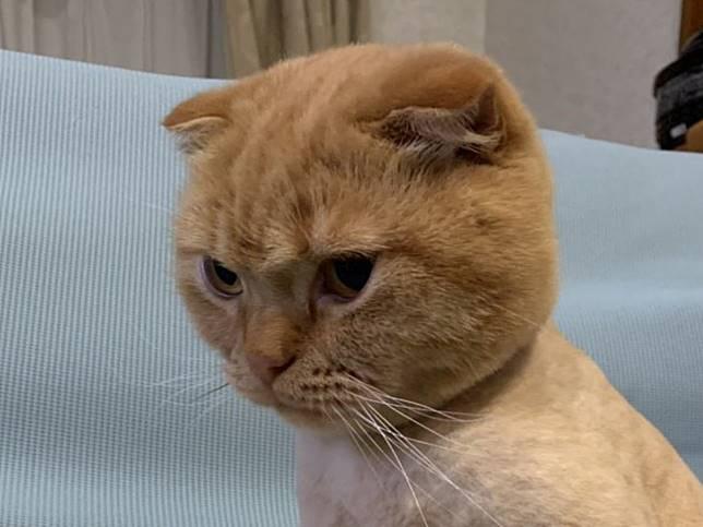 貓咪剃毛後滿臉不爽 往下一看網秒懂笑噴:原來遮不住了!
