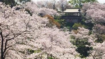 櫻花樹下,踏上未知的道路