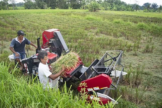 Farmers is harvesting rice with a new machine in Sleman, Yogyakarta on April 1. The rice harvest which was attended by Sleman Regent Sri Purnomo was to check food stock during the civil emergency due to the Coronavirus outbreak.