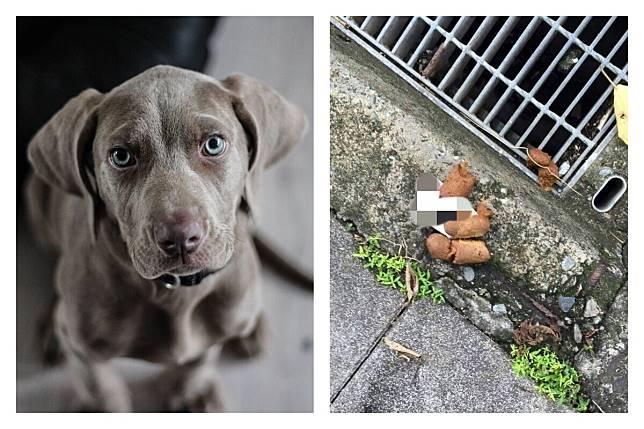 ▲如果今天在遛狗的時候看到一張「千元大鈔」被壓在「狗屎」下面,到底要不要撿呢?(圖/翻攝自 pixabay 和網路)