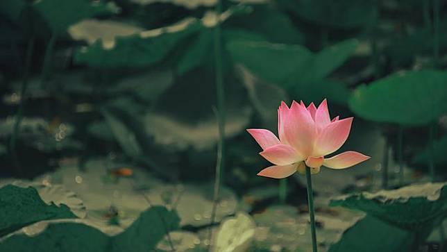 45 Kata Kata Mutiara Tentang Bunga Anugerah Bagi Bumi Bola Com Line Today