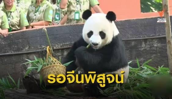 สวนสัตว์เชียงใหม่ รอทีมจีนผ่าชันสูตรแพนด้า