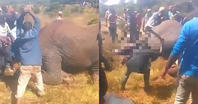 大象覓食慘遭村民持斧猛攻 「一片血肉模糊」活活被砍死