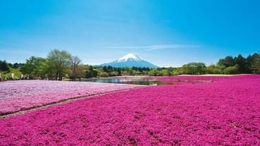 「富士芝櫻祭」你非去不可的 7 個理由