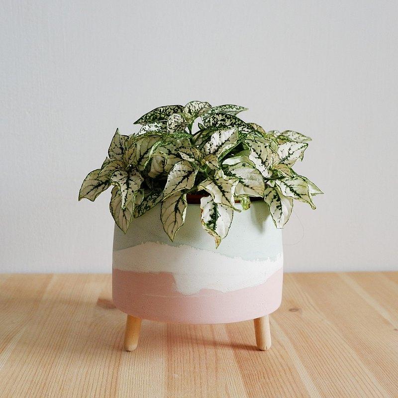 [ 櫻花粉X優格白 X小草綠] 多了木腳的水泥盆,能讓植物與盆器好好呼吸,也能為空間帶來不同氛圍,是陪你一起生活的好夥伴。