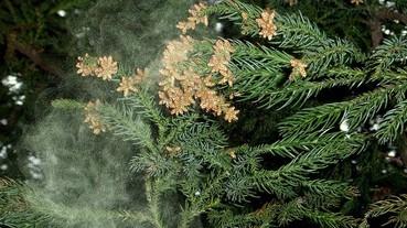 #藥妝店直擊:如何對抗花粉症