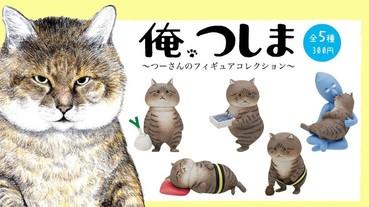 貓奴必收!貓咪漫畫《俺、つしま》扭蛋實體公開 圓滾滾的模樣超療癒