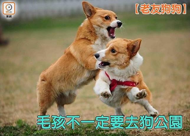 每個人的性格各有不同,狗狗亦然,如果狗狗個性較內向,不用逼迫牠們一定要到狗公仔遊玩,做人做狗都一樣,做自己就可以了。(設計圖片)