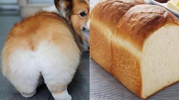 柯基的美臀就像麵包?那些跟食物莫名相似的狗狗