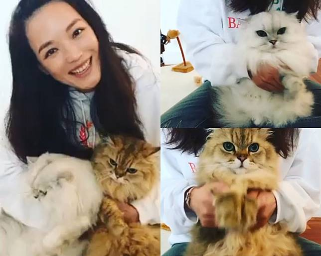 舒淇攬愛貓同Fans拜年。