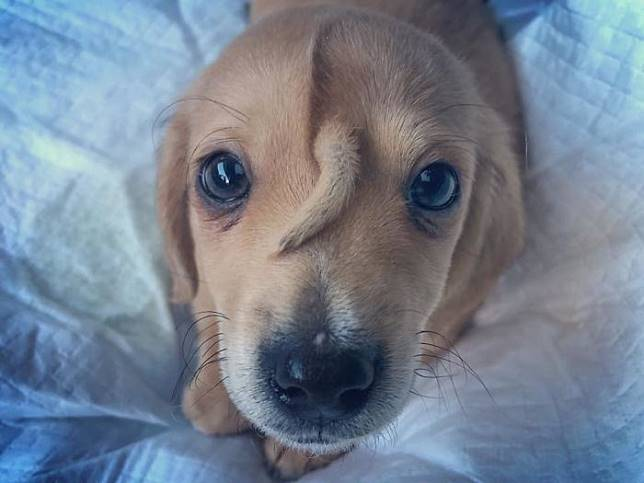 Narwhal, anak anjing yang viral karena punya ekor di jidat.