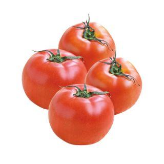 トマト(Lサイズ)