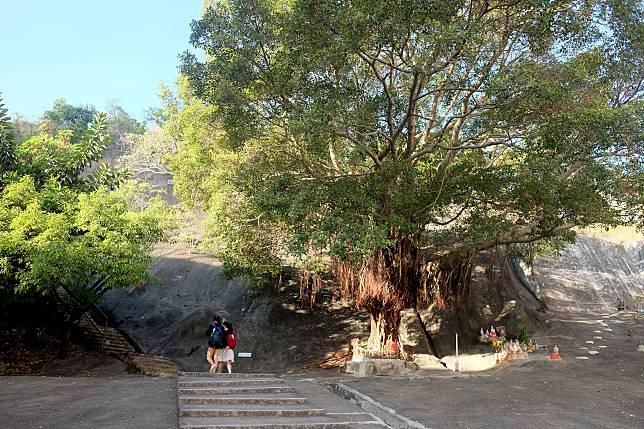 沿指示牌前往行山徑的起點,先看見一棵大榕樹,樹下有街坊在此供奉神佛。