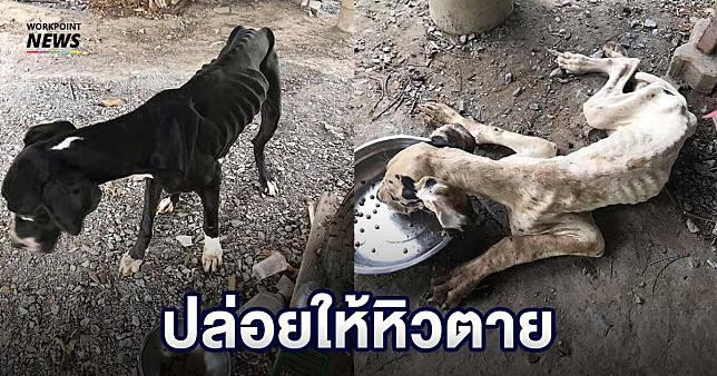 สุดสลด สถานเพาะพันธุ์หมา ประสบวิกฤตเศรษฐกิจ ปล่อยให้เกรตเดนหิวโซจนตาย