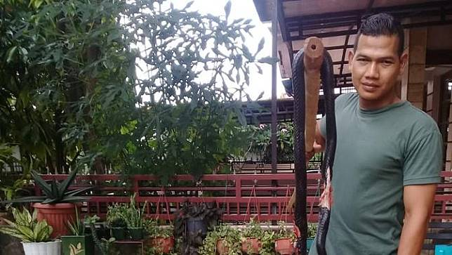Ular Kobra di Grand Depok City