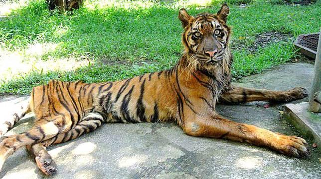 6 Bukti Tragis Penderitaan Satwa di Kebun Binatang Indonesia - MediaRiau.com