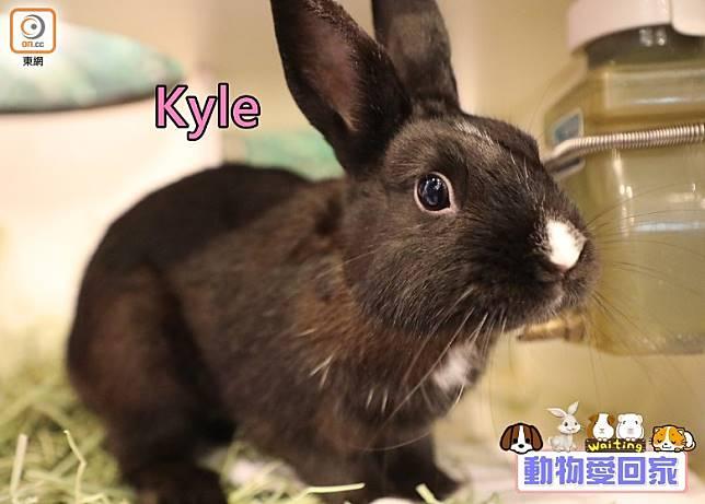 Kyle一身亮黑色,只有鼻子、四肢是白色。(愛協提供)