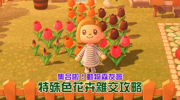 《集合啦!動物森友會》花卉雜交攻略,來一起養出特殊花色