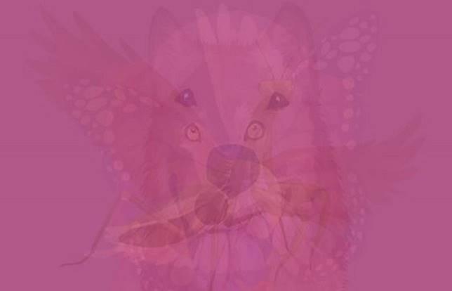 ▲第一眼看到哪隻動物?秒解你的「潛在個性」。(圖/翻攝自VIDAORANGE)