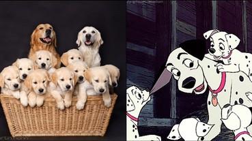 一隻狗就能療癒你,那一群狗呢?超萌「狗狗全家福」一次融化你的心!
