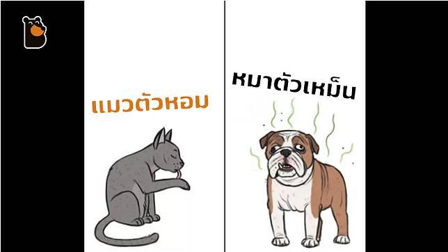 ทาสแมวต้องปลื้ม กับ 4 เหตุผลที่ว่าทำไมเราควรเลี้ยงน้องแมว มากกว่าน้องหมา