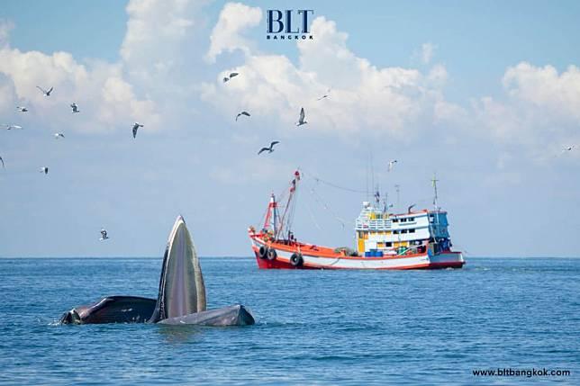 คมนาคมชูท่าเรือบางตะบูน บ้านแหลม จ.เพชรบุรี เป็นแลนด์มาร์กท่องเที่ยวเชิงธรรมชาติ