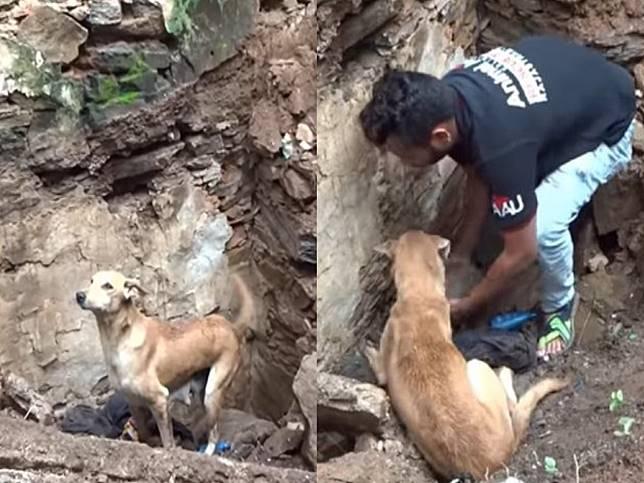 母狗嗚咽求人類救幼犬 不停挖掘倒塌殘骸過程令人動容!