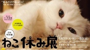 【貓奴的黃金週】貓貓懶洋洋展開鑼