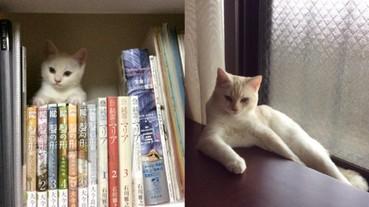 剛收養的貓咪都好可愛 經過 3 個月後牠的姿態就變成...