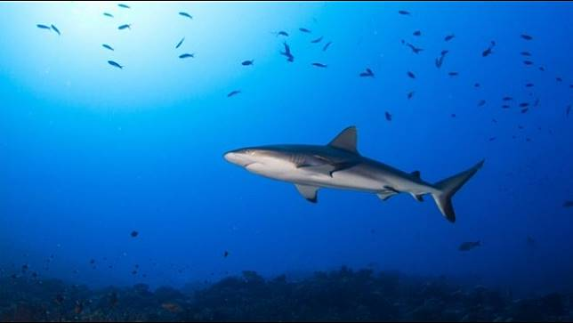กลุ่มอนุรักษ์ระบุปริมาณออกซิเจนหายไปส่งผลต่อความเป็นอยู่ของปลาทะเลหลายชนิด