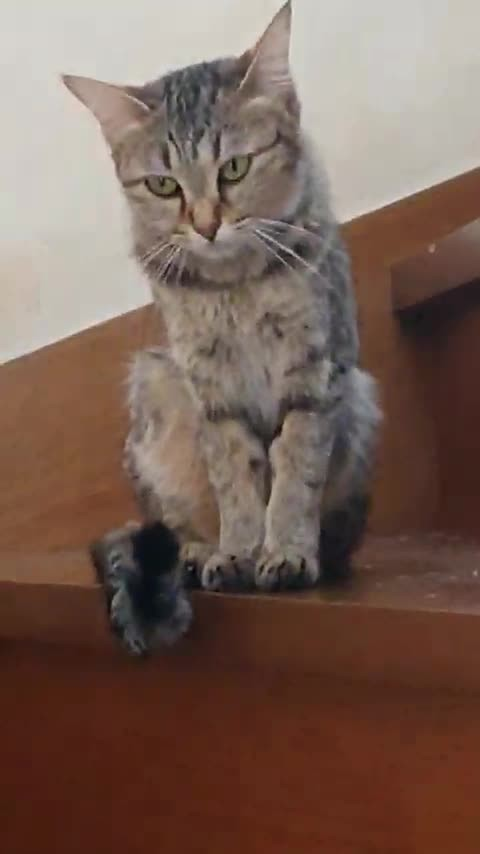 CACHE_VIDEO_MOV_0215.mp4