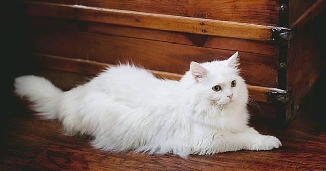 7 Tips Cara Merawat Kucing Persia agar Jauh dari Penyakit dan Kutu