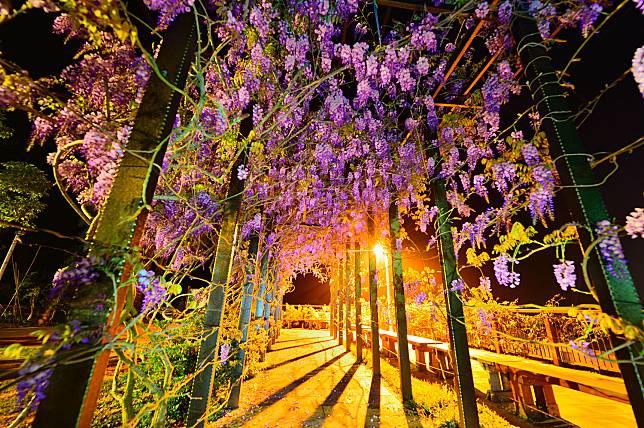 又見紫藤花海!茶鄉瑞里變身浪漫紫戀山城_25個賞花景點等你來打卡_2.jpg