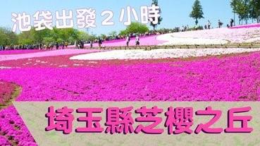 睇芝櫻~不一定去北海道!
