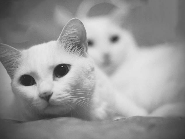 返港後,佢得知陪伴佢16年嘅愛貓「小黑」離世。