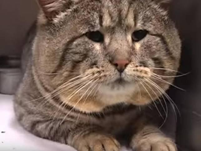 走失貓潛入「狗糧倉庫」狂偷吃 半年後被屋主抓包:卡在狗門上!