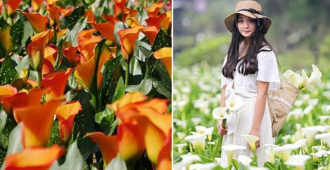 連假找一天去賞花~順便更新一下社群大頭照吧!
