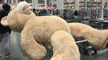 開車如何順利載回 Costco 巨熊?他想到這個超爆笑的妙招!