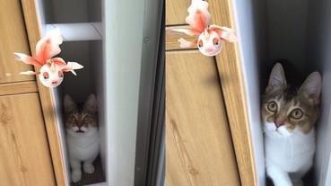 寵物竟看得見?貓咪緊盯主人的《Pokemon GO》角金魚 表情簡直傳神!