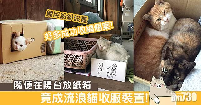 流浪貓收服裝置:陽台放紙箱……