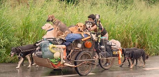 Pak Edgardo yang menyelamatkan anjing di Meksiko dengan berjalan ribuan kilometer