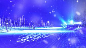 【北海道】札幌出發 旭山動物園・男山酒造清酒博物館・ 青池・白鬚瀑布點燈(冬季限定)巴士一日遊