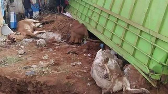 Truk bermuatan sapi alami kecelakaan. (Facebook/Viral Tranding)