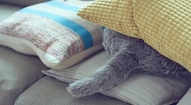 抱枕足以用來滿足各位對飼養貓咪的期待。(互聯網)