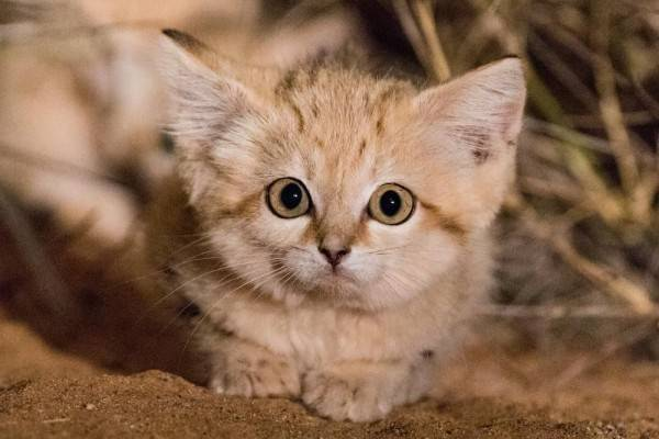 Download 94+  Gambar Kucing Nyengir Imut HD