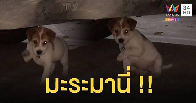 มะระออกมานี่!! ชมนาทีลูกสุนัขกวักมือเรียกเจ้าของ คนแห่ดูเฉียด 2 ล้านวิว