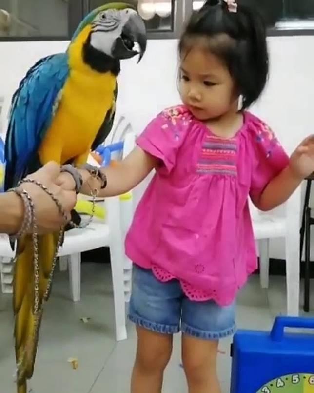 隻鸚鵡有成個人仔咁高!