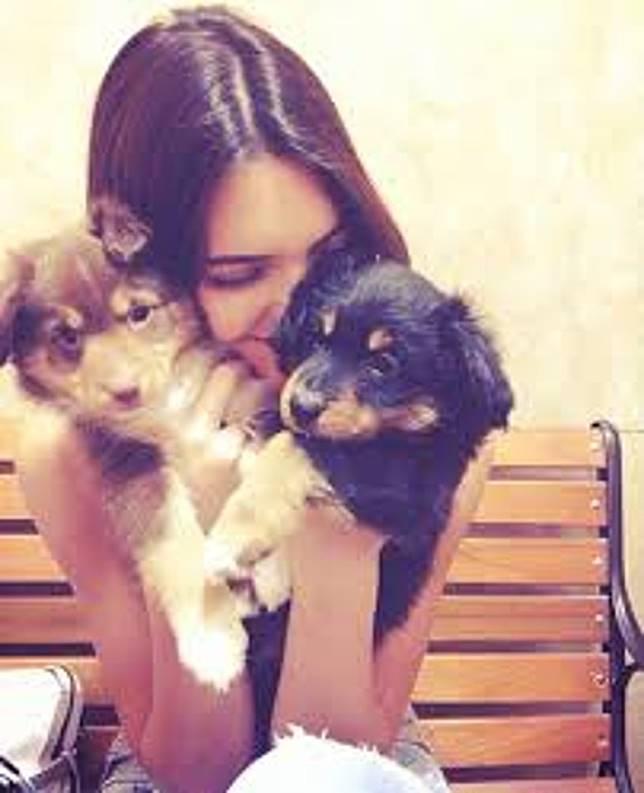 Kendall養了多隻愛犬。