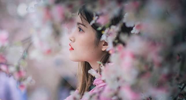 Ingin Menikmati Bunga Sakura? Kamu Bisa Kunjungi 6 Tempat Ini