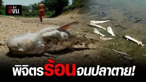 พิจิตรร้อนจัด! ปลาหน้าวัดประดาทอง ทยอยตายจากภัยแล้ง-แถมมีคนแอบขโมยจับปลา